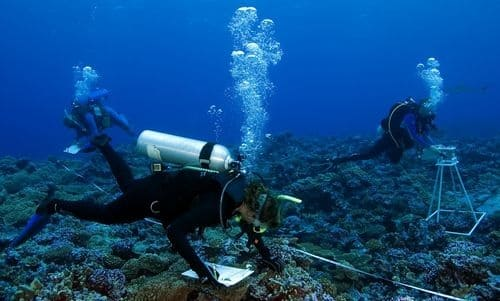 Marine Biologist India